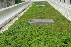 Vegetative roof in MA